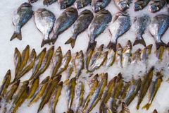Fresh fish on ice in fish market. Fresh fish on ice decorated for sale at market stock photos
