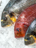 Fresh Fish on ice at the fish market Royalty Free Stock Images