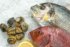 Fresh Fish on ice at the fish market Stock Photography
