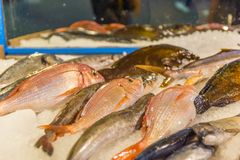 Fresh raw fish on ice. Fresh fish on ice at the fishmarket, Greece Skiathos, September 2018 stock photo