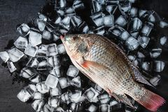 Fresh fish on the ice. On black wooden table stock image
