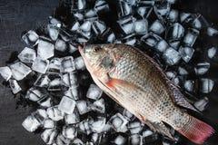 Fresh fish on the ice stock image
