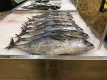 fresh fish on ice Royalty Free Stock Photography