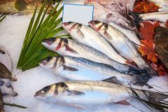 Fresh fish on ice in fish market.  stock images