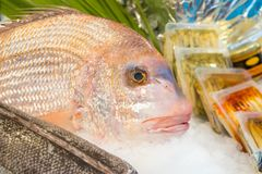 Fresh fish on ice in fish market.  royalty free stock photography