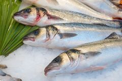 Fresh fish on ice in fish market.  stock photography