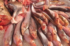 Fresh fish on ice in a market. Assortment of fresh fish on ice in a market Royalty Free Stock Photo