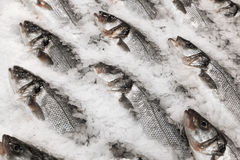 Fresh fish on ice Royalty Free Stock Image
