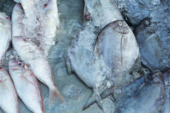 Fresh fish on ice in the market. Fresh fish on ice in the market Royalty Free Stock Image