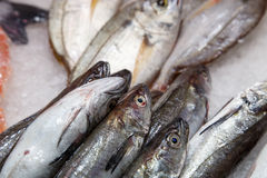 Fresh fish on ice from a market. Fresh fish on ice at the market Royalty Free Stock Photography