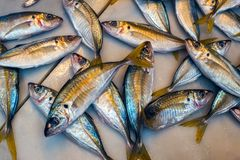 Fresh fish on ice at the market. Close view Royalty Free Stock Image