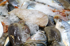 Fresh fish with ice, at the market. Detail of some fresh fish with ice, at teh market of palermo, sicily, landscape cut Royalty Free Stock Image