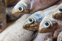 Fish on ice at the market. Fresh fish on ice at the market royalty free stock photography