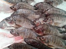 Fresh fish on ice in the market. food Stock Photography