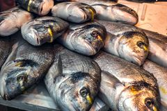 Fresh fish on ice at the market. Close view stock photography