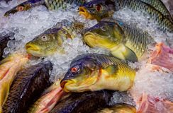Fresh fish in ice at the market. Seafood store royalty free stock images