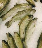 Fresh fish on ice at market Royalty Free Stock Photography