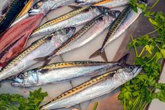 Fresh fish on ice at the market with parsley. Close view Stock Photos