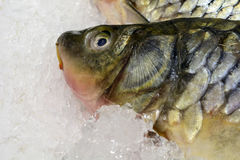 Fresh fish on ice in the market. seafood, non-GMO and chemistry. Fresh fish on ice in the market. seafood, non-GMO and chemistry royalty free stock photo