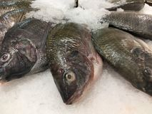Fresh fish on ice in market seafood for sale. Fresh fish on ice in market seafood royalty free stock photography