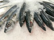 Fresh fish on ice in market seafood for sale. Fresh fish on ice in market seafood stock image