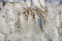 Fresh fish on ice at the market  Thailand Royalty Free Stock Image