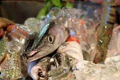 Fresh fish on ice at market, Thailand Royalty Free Stock Photo