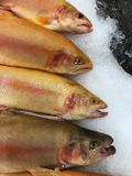 Fresh fish in ice on the market. View stock photo
