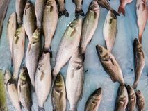 Fresh fish on ice in the market. Wide angle view of fresh fish on ice in the market royalty free stock image