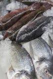 Fresh fish on ice royalty free stock image