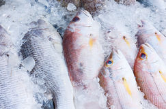 Fresh fish on ice Stock Image