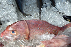 Fresh fish on ice Stock Photography
