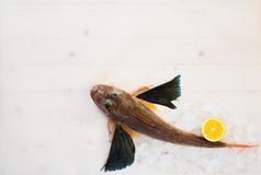 Fresh fish on ice Royalty Free Stock Images