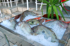 Fresh fish on ice. In a restaurant royalty free stock photo