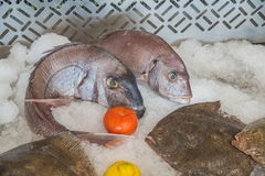 Fresh fish on ice in the restaurant in Rabat Royalty Free Stock Image