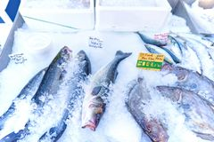 Fresh fish on ice for sale with price signs in local marketplace. Beaulieu-sur-Mer, France Royalty Free Stock Image