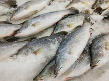 Fresh fish on ice sale in seafood market. Thailand Royalty Free Stock Photos