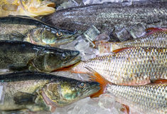 Fresh fish on ice for sale Stock Photography