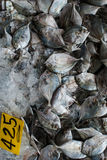 Fresh fish on ice Stock Photos