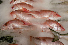 Fresh Fish on Ice Royalty Free Stock Images