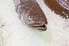 Fresh fish on ice for selling at Royalty Free Stock Image