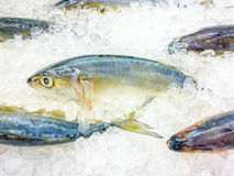 Fresh Fish on Ice Stock Images
