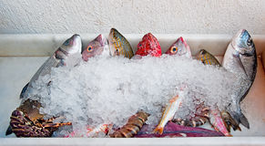 Fresh fish with ice on the tray Stock Photo