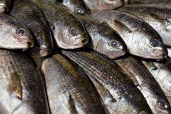 Fresh fish at Tsukiji fish market in central Tokyo, Japan royalty free stock photography