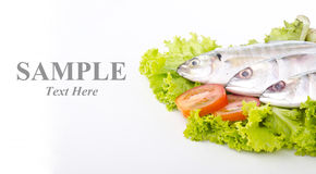 Fresh fish with input sample text Royalty Free Stock Photography