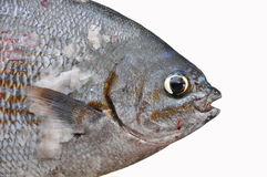 Fresh fish isolate on white back ground, Fillet of Fish, Healthy food, Fresh fish from sea Stock Photo
