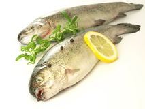 Fresh fish, isolated Stock Photography
