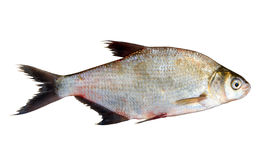 Fresh fish isolated over white Royalty Free Stock Images