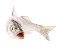Fresh fish isolated on white Royalty Free Stock Photo