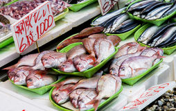 Fresh fish in Japanese market Stock Images